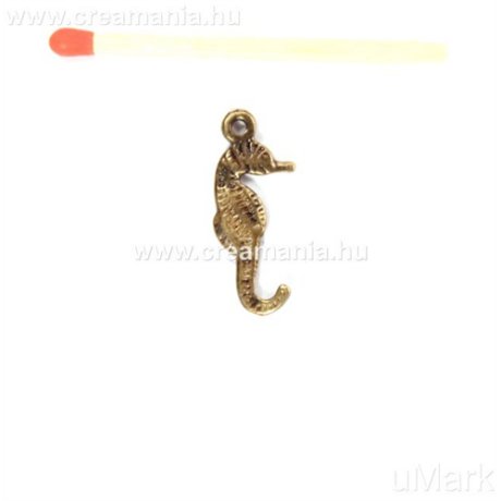Csikóhal